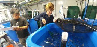Estudio de acuicultura