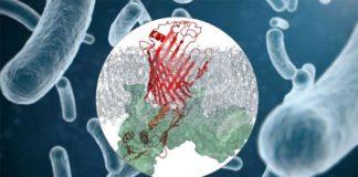 Complejo proteico en bacterias