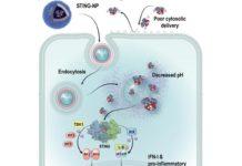Nanopartícula contra el cáncer