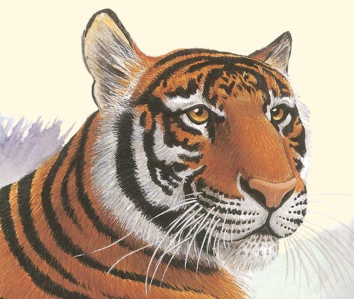 Ilustración de la portada de