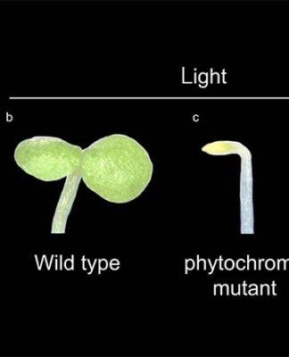 Planta y su mutante