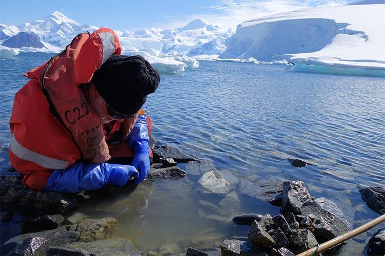 John Spicer recolecta anfípodos intermareales de South Cove