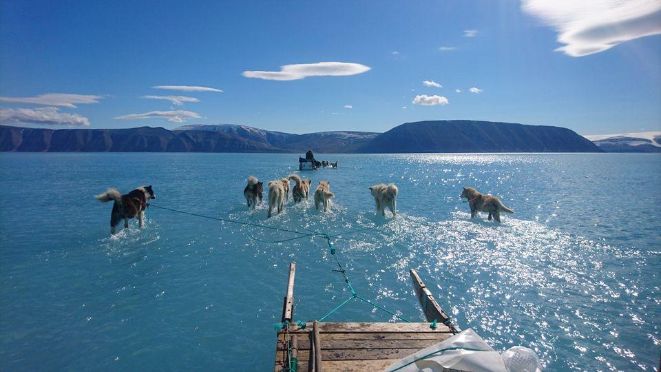 Perros de trineo caminan sobre un glaciar que se deshiela en Groenlandia. Foto: Steffen M. Olsen/Danish Meteorological Institute (DMI)