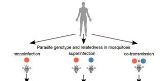 Tabla de secuenciación de células individuales en parásitos de la malaria
