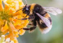 Abeja en busca de polen