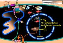 Regulación del cáncer con EGR4