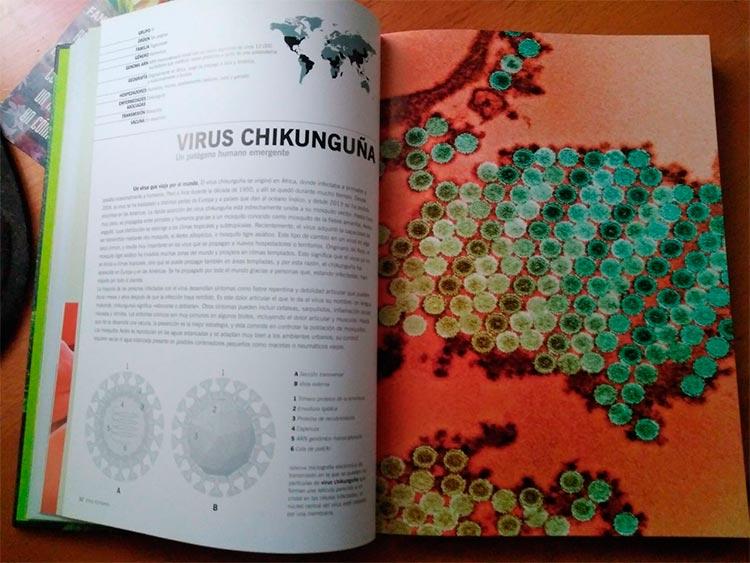 Ficha del virus chikunguña