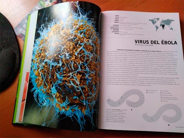 Ficha del ébola