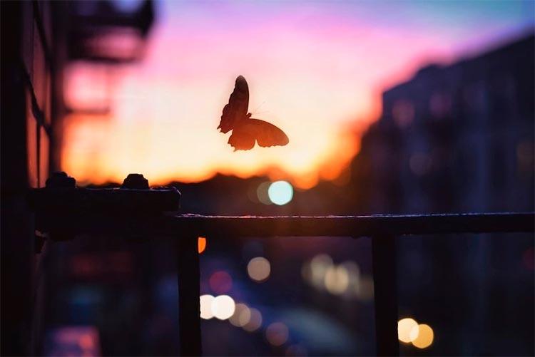 Mariposa contra fondo urbano