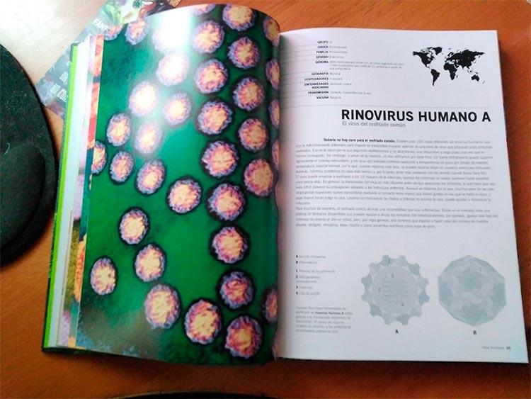 Ficha del rinovirus humano A