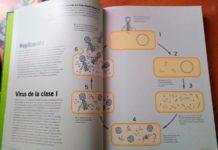 Replicación de los virus de clase I