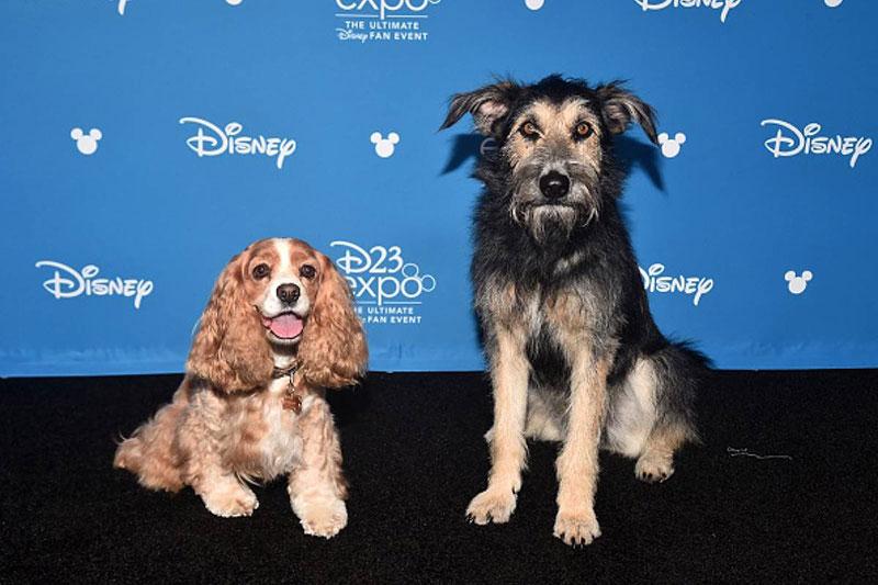 perros la dama y el vagabundo