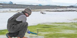 Toma de muestras de algas de nieve