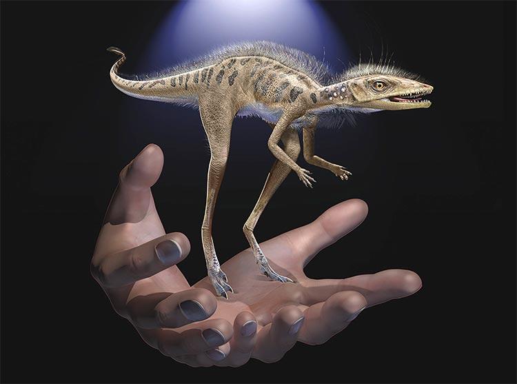 Comparación de Kongonaphon kely con una mano humana