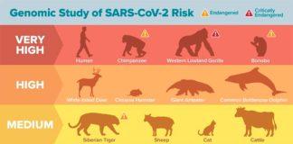 Animales susceptibles de contagiarse del COVID-19 según modelos computacionales