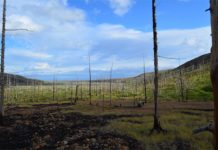 La contaminación del Ártico a gran escala ha provocado una devastadora disminución de los bosques al este de Norilsk, Rusia. Crédito: Dr. Alexander Kirdyanov