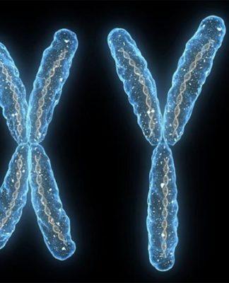Cromosoma x y cromosoma y