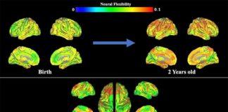 Flexibilidad cognitiva: Esta imagen ofrece datos de resonancia magnética, que muestra la flexibilidad neuronal a lo largo del tiempo.