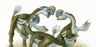 Oksoko avarsan, una especie de dinosaurio parecida a los loros
