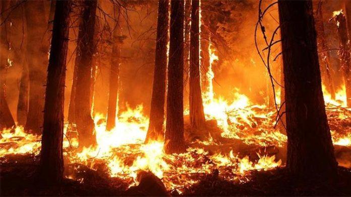 Los grandes incendios aumentan por el calentamiento global