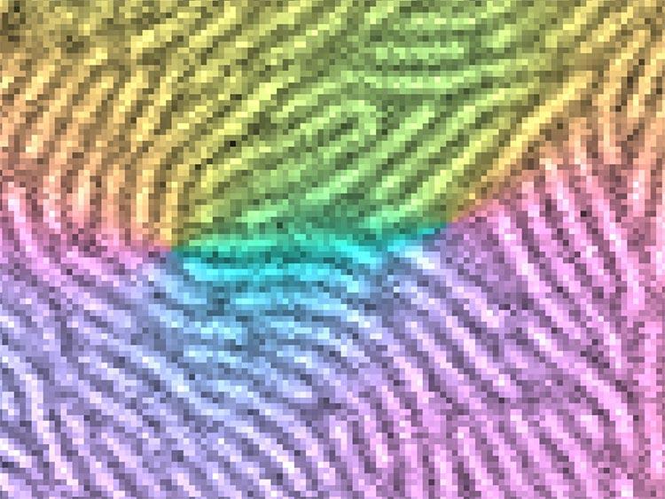 Bacterias sociales: Imagen de alta resolución de células bacterianas de Myxococcus xanthus en forma de bastón, con colores que indican la dirección de alineación celular