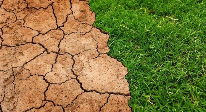 Un calentamiento de 2°C liberaría 230 mil millones de toneladas de carbono del suelo