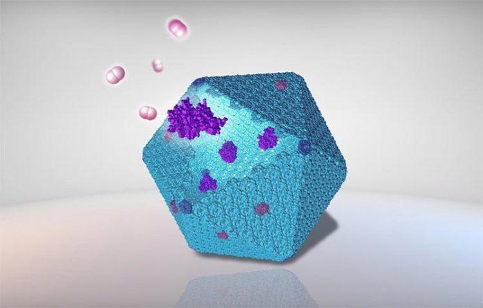 Ilustración de un carboxisoma y enzimas para producir hidrógeno, combustible limpio