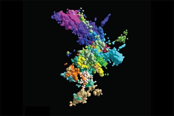 Estructura de los cromosomas: Esta imagen multicolor de cromatina se creó mediante hibridación in situ de fluorescencia multiplexada y microscopía de superresolución