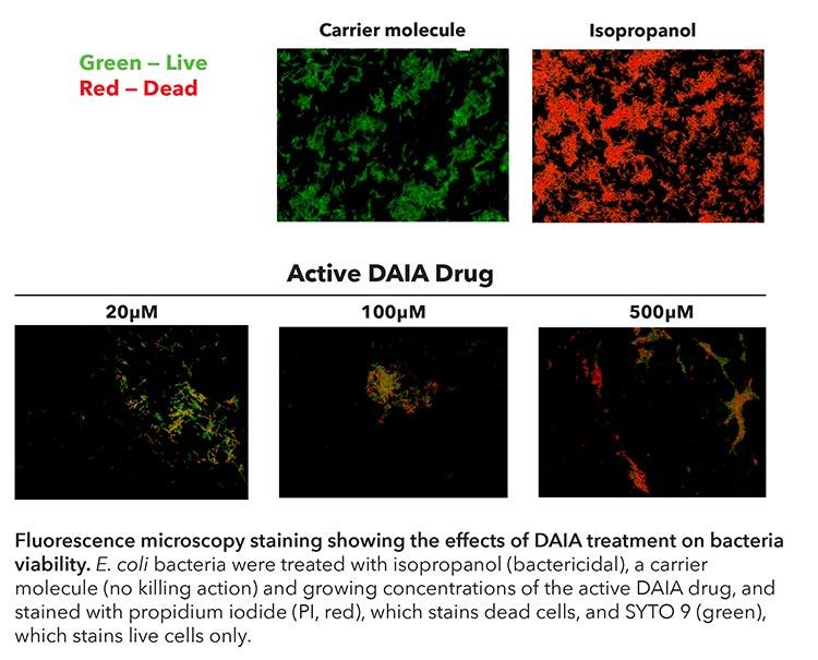 Tinción de microscopía de fluorescencia que muestra los efectos del tratamiento de antibióticos con DAIA sobre la viabilidad de las bacterias