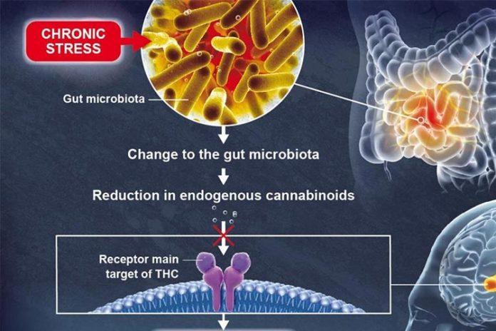 La microbiota intestinal influye en la función cerebral y la depresión
