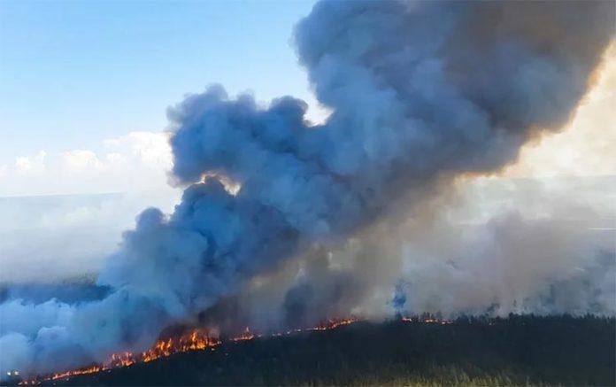 Incendio: Cambio climático: 2020 empata con 2016 como el año más caluroso registrado