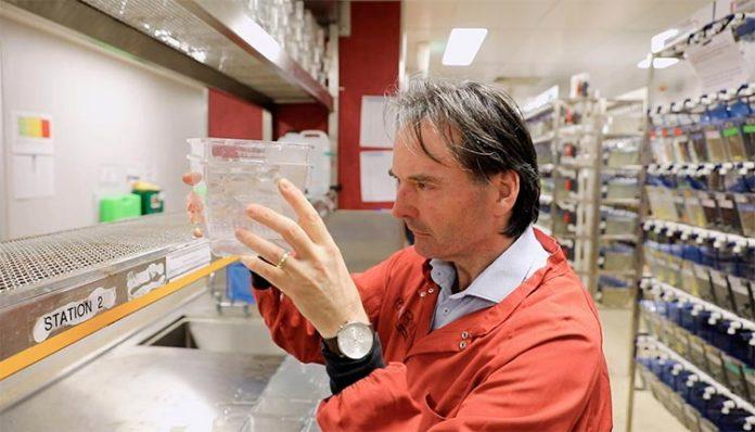 El profesor Peter Currie investiga el desgaste muscular en la instalación de pez cebra de la Universidad de Monash