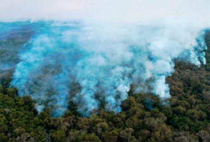 Los incendios arrasaron un tercio de la selva virgen en los humedales del Pantanal de Brasil en 2020
