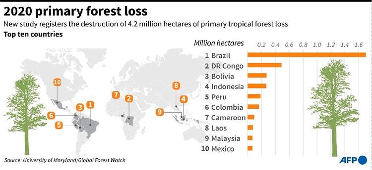Gráfico sobre los diez países con mayor pérdida de bosques primarios en 2020, según datos de la Universidad de Maryland