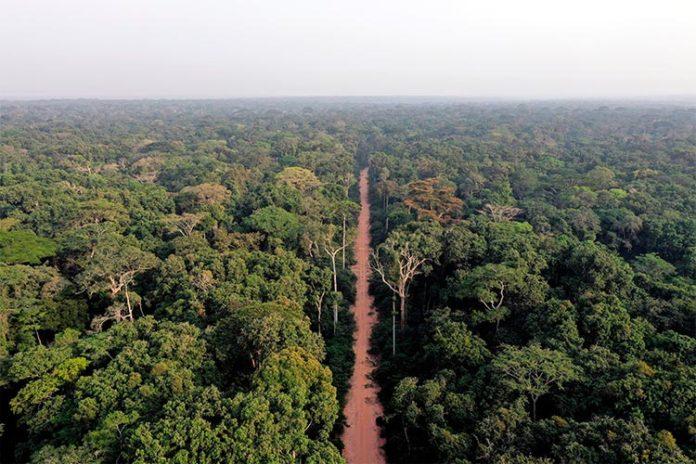 Una carretera atraviesa un bosque en el norte del Congo