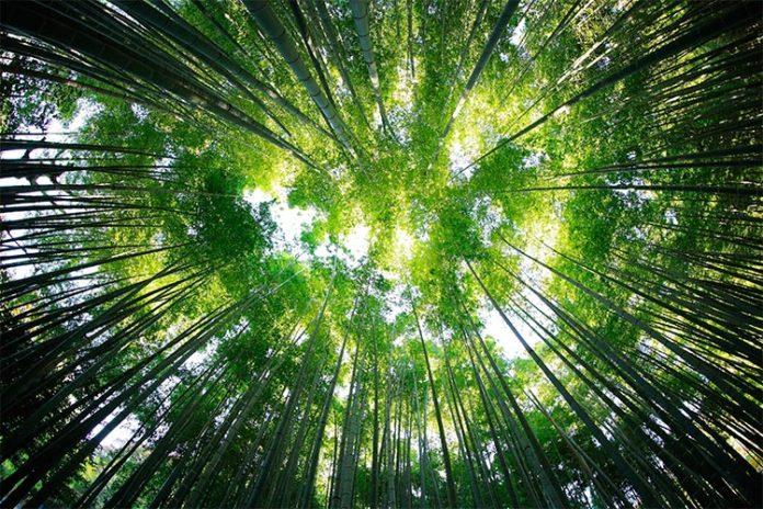 Bosque tropical que captura CO2