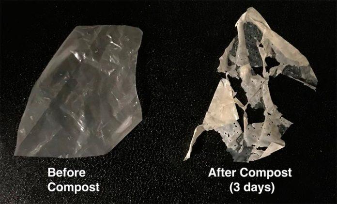 El plástico modificado (izquierda) se descompone después de sólo tres días en compost estándar (derecha) y por completo después de dos semanas