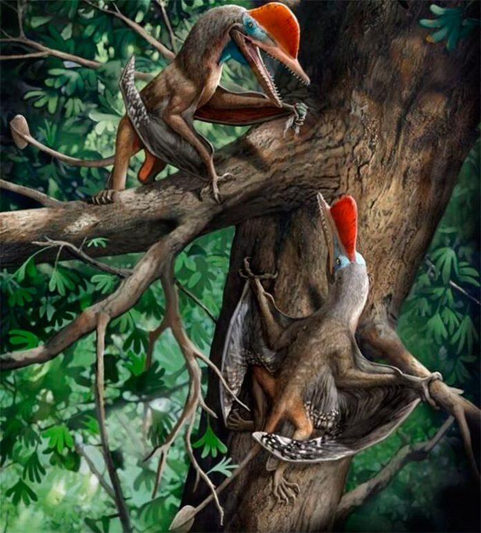 Kunpengopterus antipollicatus, con el pulgar oponible más antiguo
