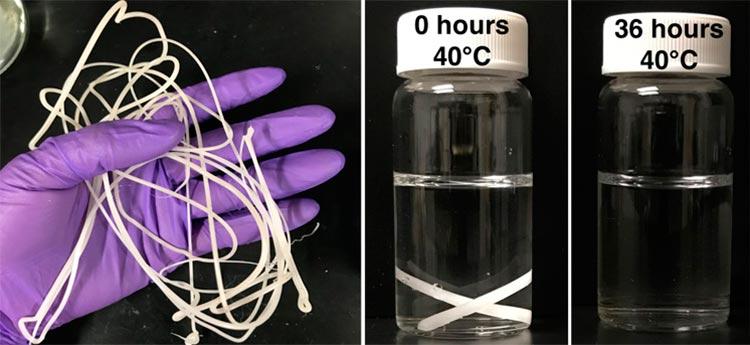 Un filamento de plástico PCL (policaprolactona) extruido en fusión (izquierda) con nanoclusters incrustados de la enzima lipasa envuelta en RHP se degradó casi por completo en pequeñas moléculas en 36 horas en agua tibia (40ºC)