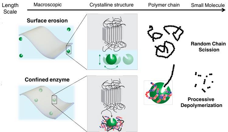 Las enzimas como la lipasa (bolas verdes) pueden degradar los polímeros plásticos de la superficie (arriba a la izquierda), pero cortan el polímero al azar, dejando atrás los microplásticos