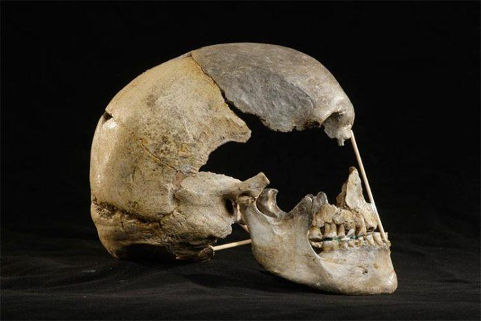 Vista lateral del cráneo casi completo de Zlatý kůň gracias al ADN de los neandertales