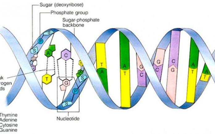 Estructura de ADN bacteriano