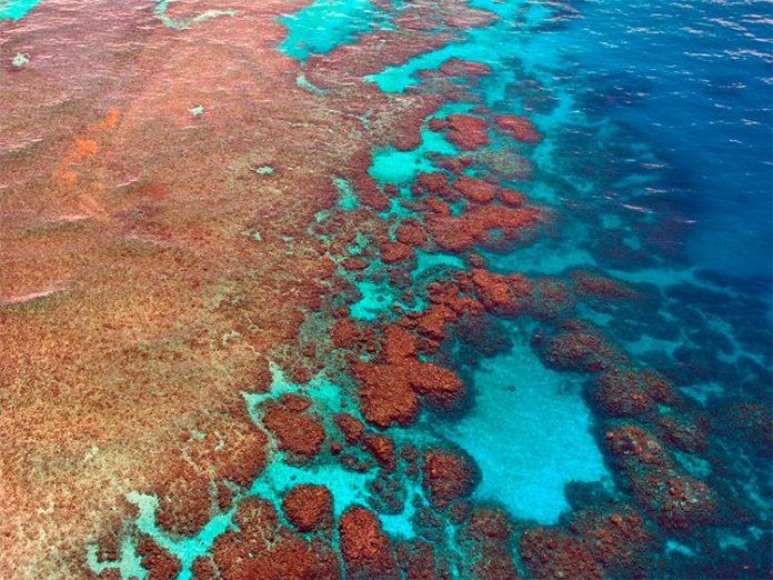 Parte de la Gran Barrera de Coral