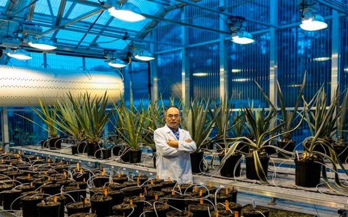Un solo gen aumenta la resiliencia climática, el rendimiento y la captura de carbono en los cultivos