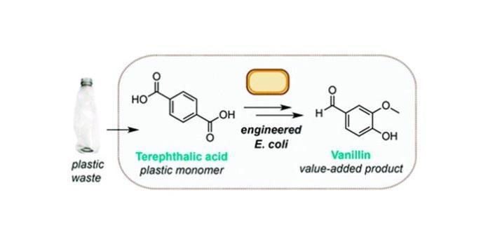 Reciclaje de plástico usado en vainillina (vainilla) con la bacteria E. Coli