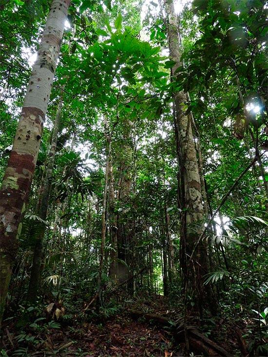 La región de Putumayo de la selva amazónica en Perú, interior