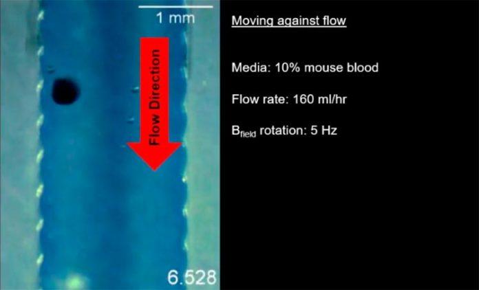 Los robots MANiAC se movieron corriente arriba contra un flujo de fluido similar al que encontrarían en el sistema nervioso