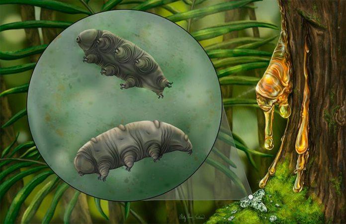 Reconstrucción artística del tardígrado Paradoryphoribius chronocaribbeus en musgos